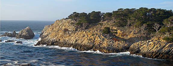 Cypress point - one of two native locations for the historically wider-ranging Monterey cypress.