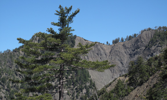 The eroded hillsides favored by sugar pine.