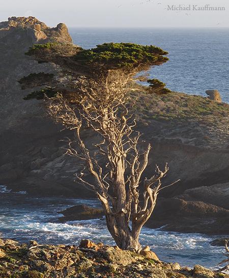 Monterey_Bay 271a