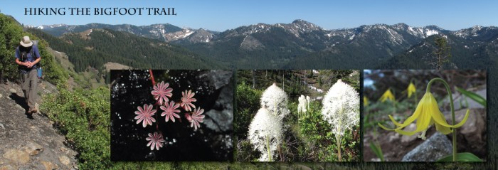 The Bigfoot Trail is a journey to discover the natural history of the Klamath Mountains.