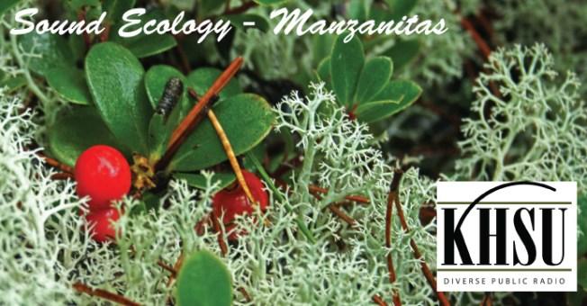Arctostaphylos uva-ursi in the Lanphere Dunes, Humboldt County.