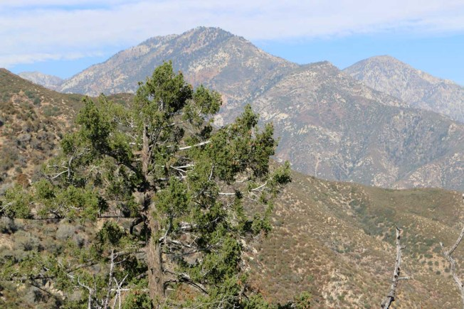 Cucamonga Wilderness from the San Dimas Experimental Forest.
