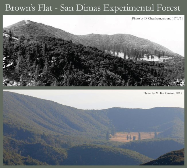 Two images, 45 years apart, show the decline of the lowest-elevation stand of ponderosa pine in the Angeles National Forest.