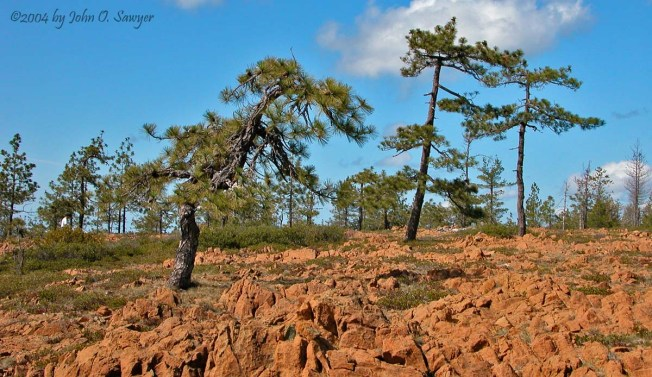 Serpentines of the High Divide with Jeffrey Pine and Knight's Pinemat Manzanita -- by John O. Sawyer.