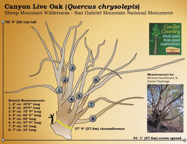 Measurements for the San Gabriel Oak