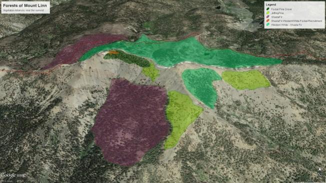 Forested Vegetation of Mount Linn