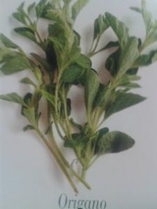 Le erbe aromatiche  Che profumo in cucina