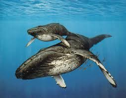 Whale watching season starts