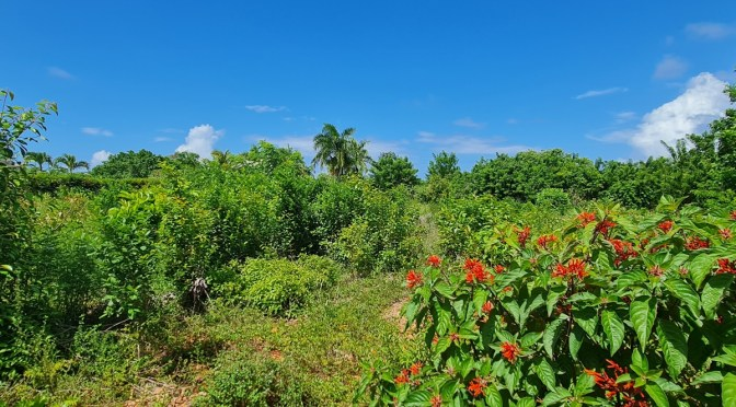 EXCELLENT LOT WITH PARTIAL OCEAN VIEW