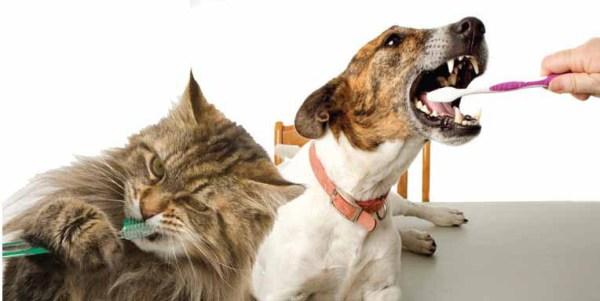 Easy Steps for Pet Dental Care