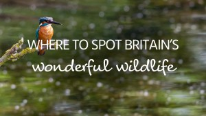 wildlife day image
