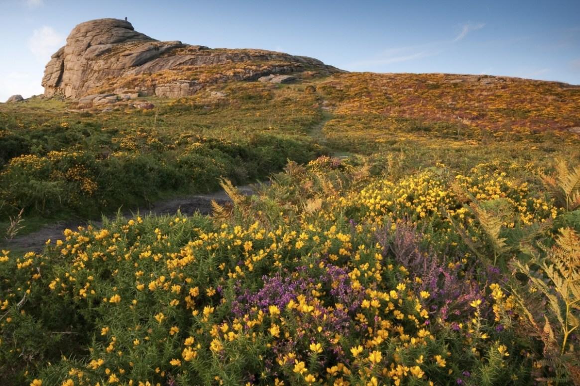 Dartmoor and Michael Morpurgo