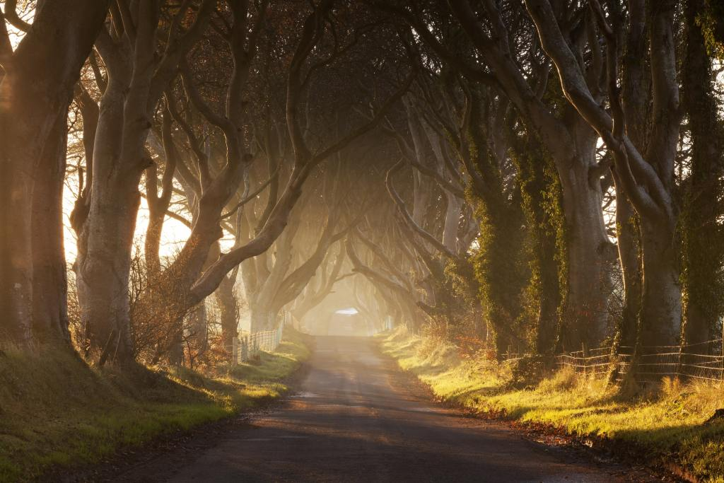 The Kingsroad aka The Dark Hedges, County Antrim