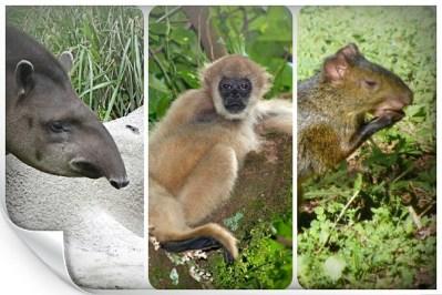 O fim de espécies e as consequências climáticas