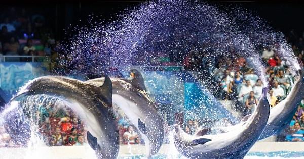 Delfinario de Dubái