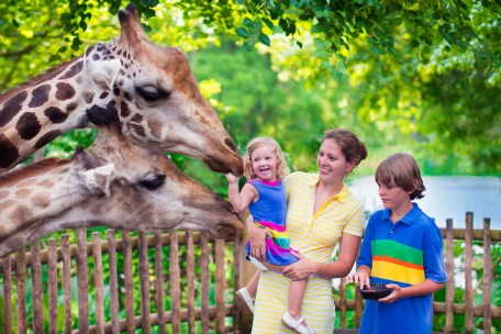 Family feeding the giraffes at the zoo on vacation