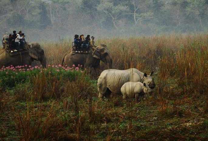 Kaziranga Wild Life Sanctuary