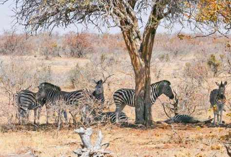 Mapungubwe National Park