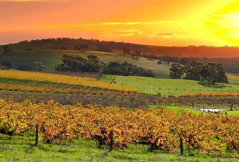 Taste Australia's Finest Wine and Dining at Barossa Valley