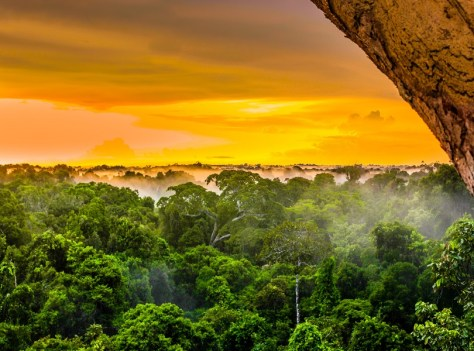 THE AMAZON RAINFOREST, BRAZIL