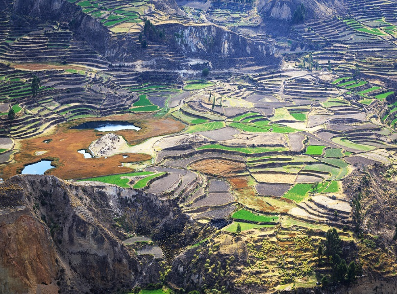 SPEND A DAY WITH THE CONDORS AT CAÑÓN DEL COLCA