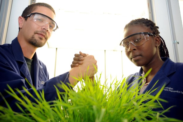 Richard Poire and Rasha Kardo battled over Brachypodium in the 2012 Battle of the Plants.
