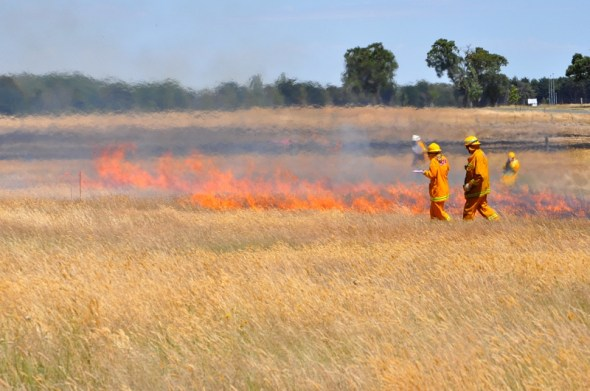 People in fire gear supervise flames burning across grassland