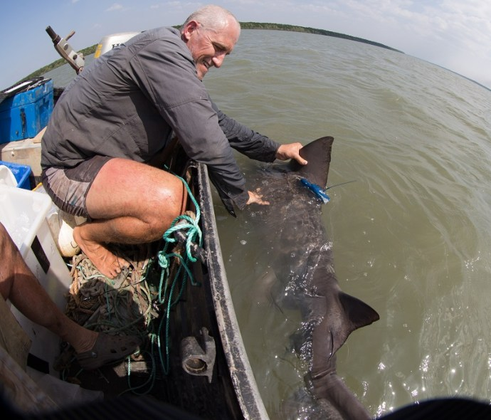 Catching up with the Speartooths: new shark specimens discovered