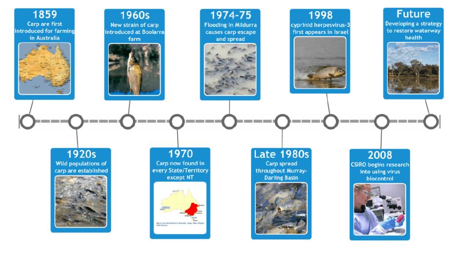 carp timeline crop
