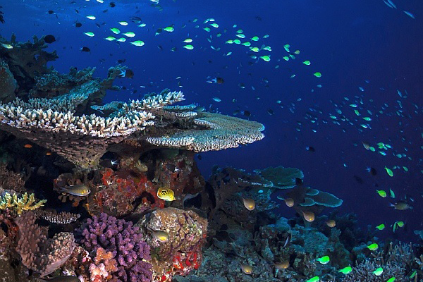Underwater-coral-reef-and-fish-Matt-Curnock-Feature