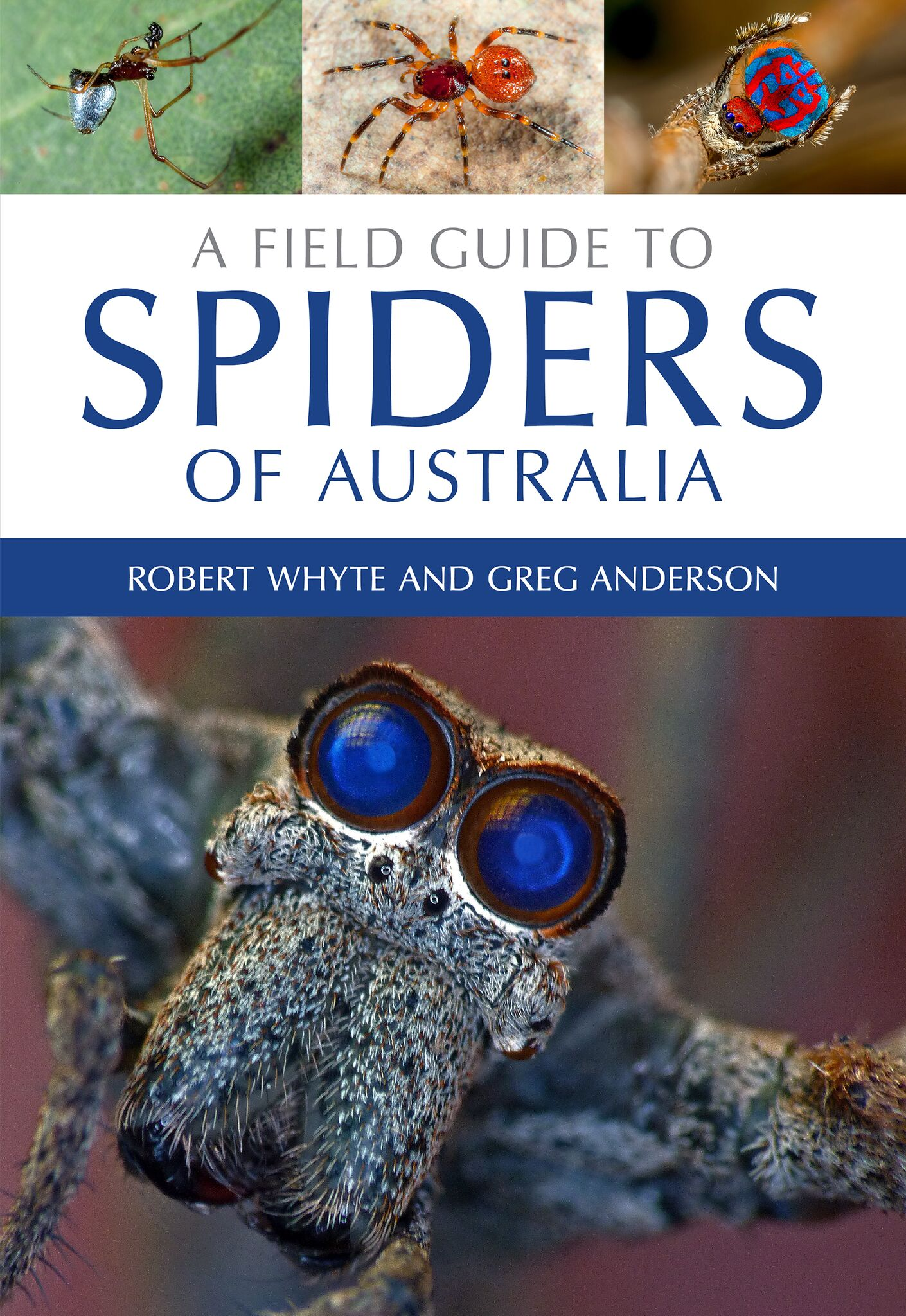 a field guide to spiders of australia pdf
