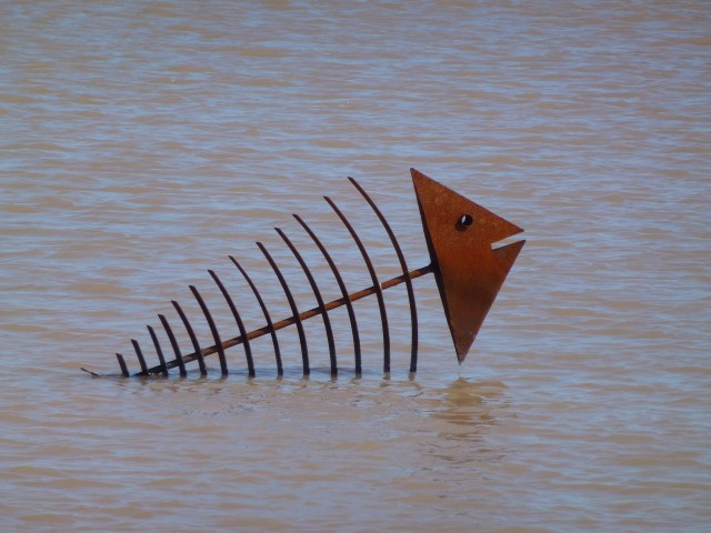 Influência do sal nos peixes em lagos ornamentais