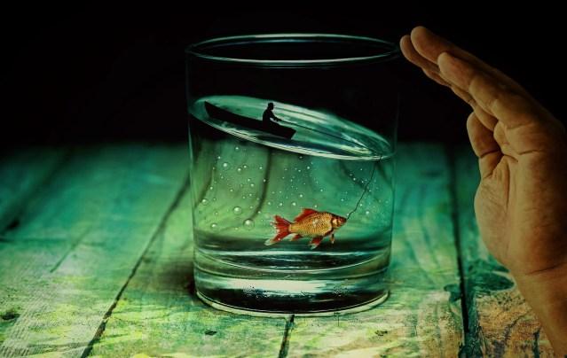 Peixes no lago ornamental