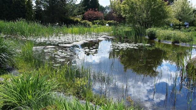 Plantas no lago