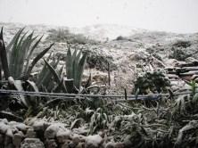 2009-01-neige-marseille-goudes-02