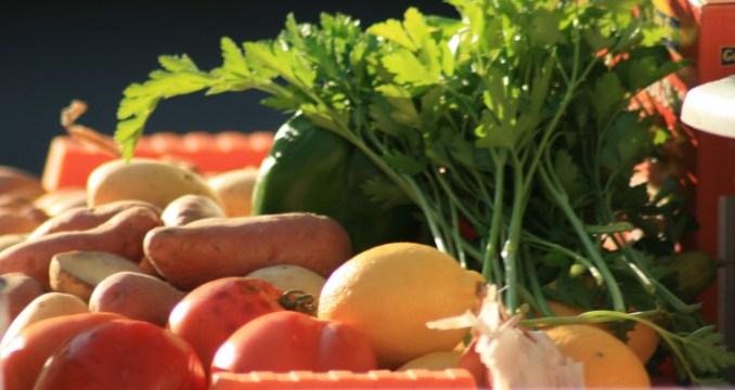 legumes-bio-754x400