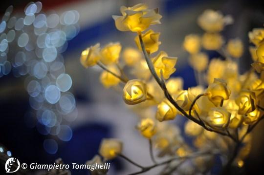 """Dantebus - """"Ranunculus - fiori di luce..."""" Giampietro Tomaghelli"""