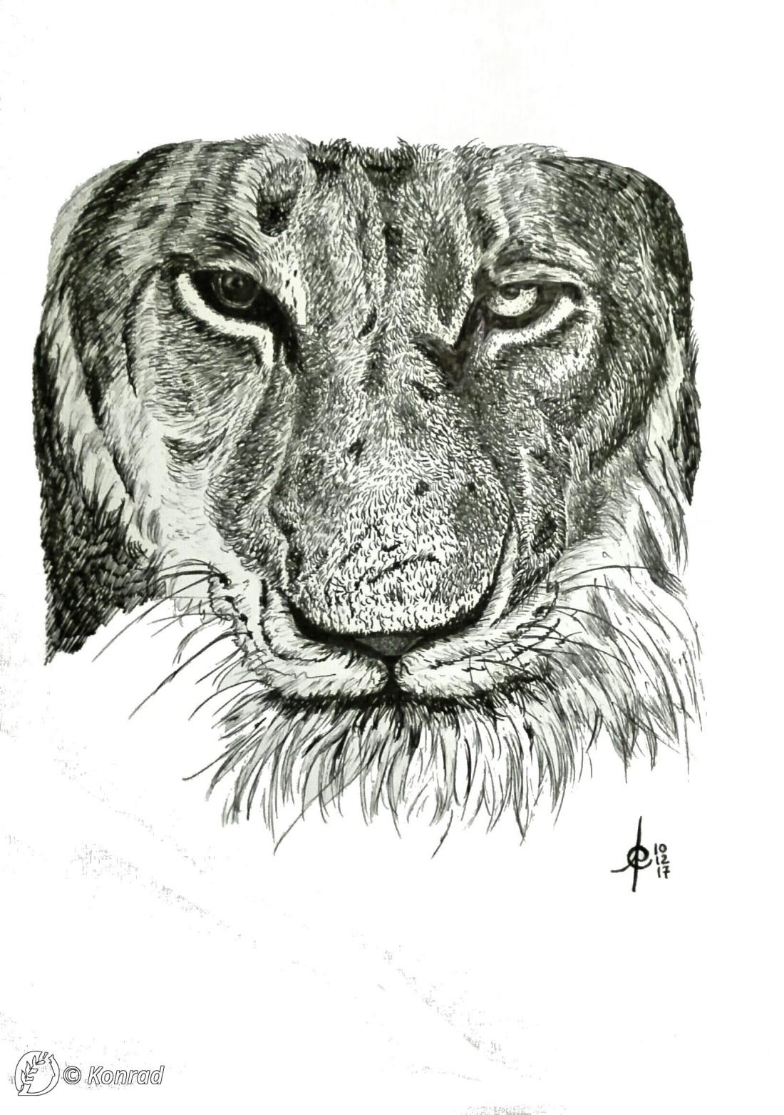 """Dantebus - """"Lion"""" Konrad"""