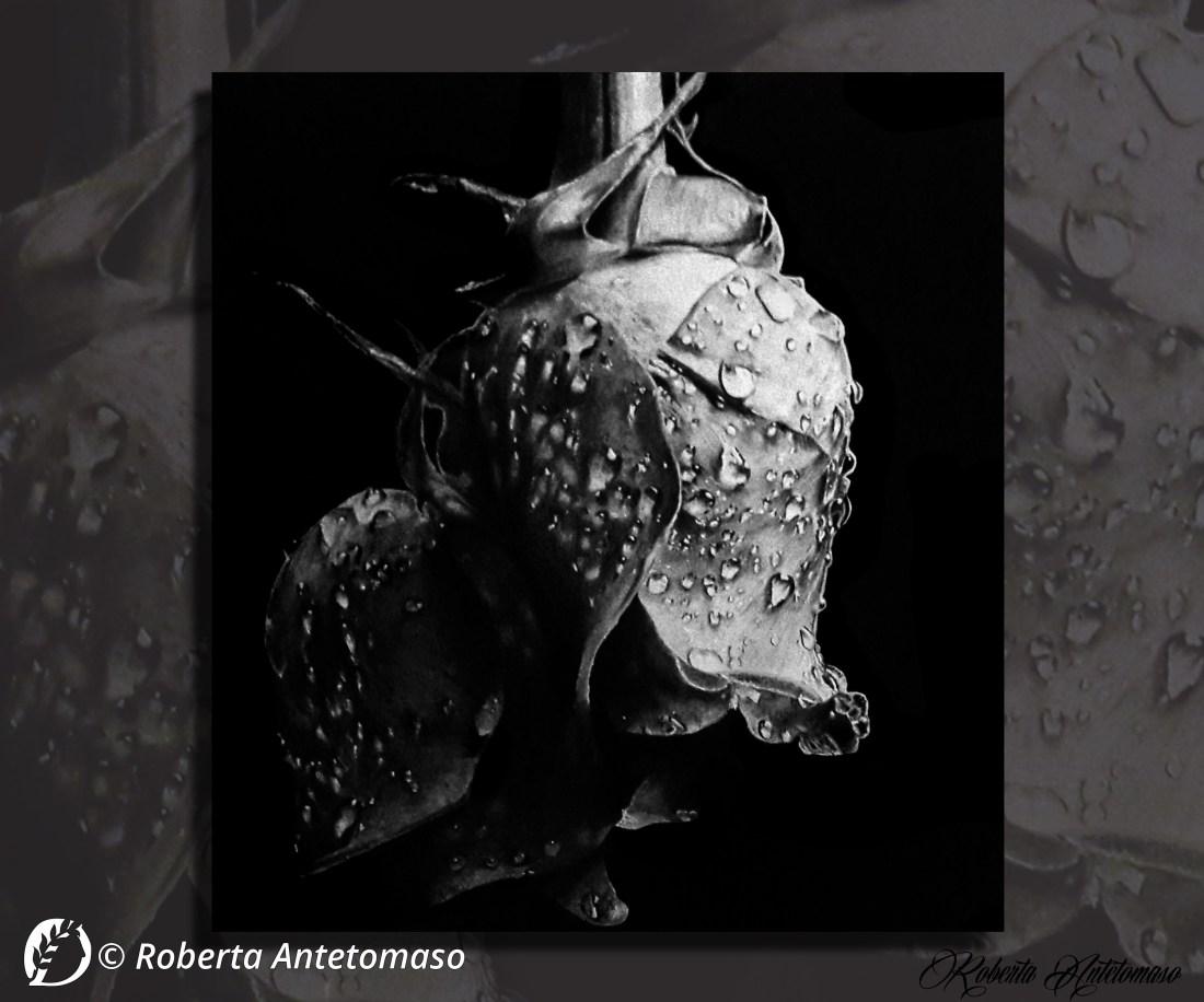 """Dantebus - """"Il pianto di una rosa"""" Roberta Antetomaso"""