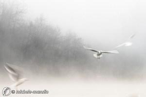 """Dantebus - """"In volo"""" Michele Masullo"""