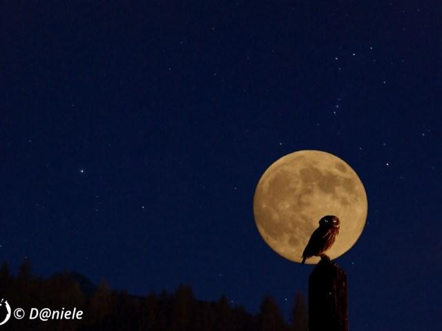 """Dantebus - """"Il guardiano della luna"""" D@niele"""