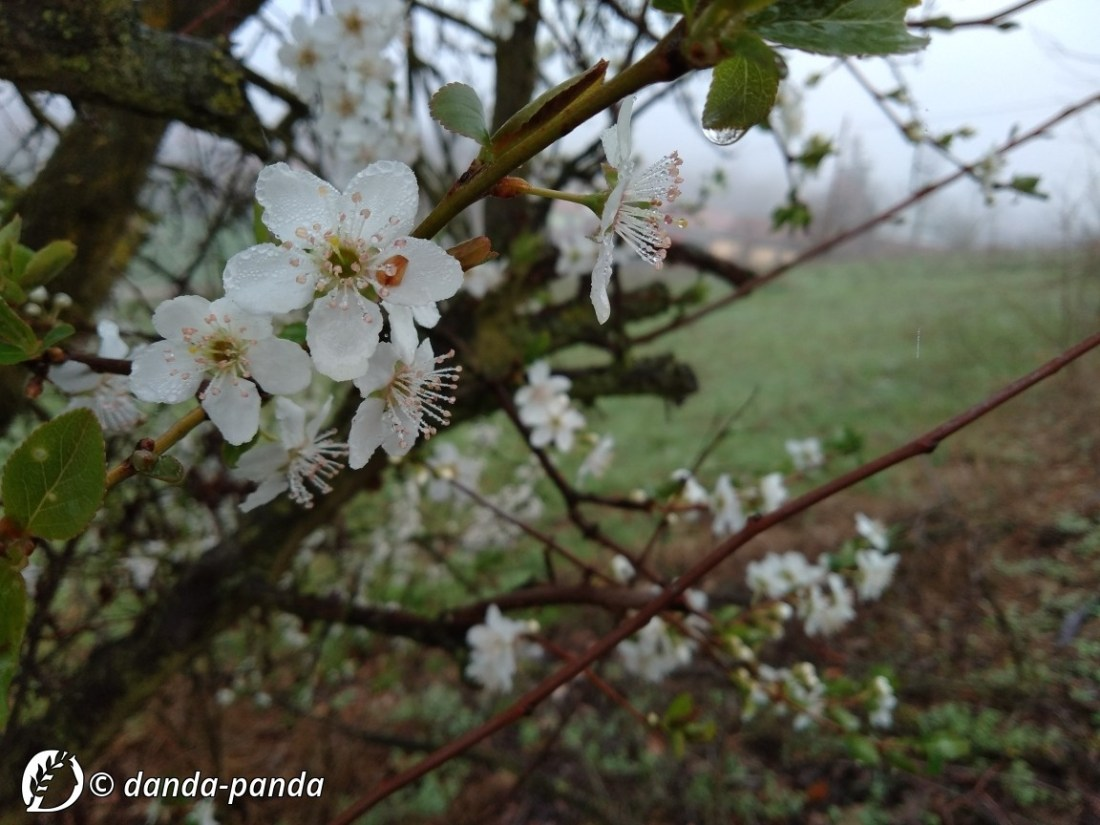 "Dantebus - ""Primavera non bussa"" Danda-panda"