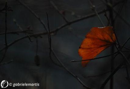 Dantebus - Gabriele Martis - Ti regalerò una foglia