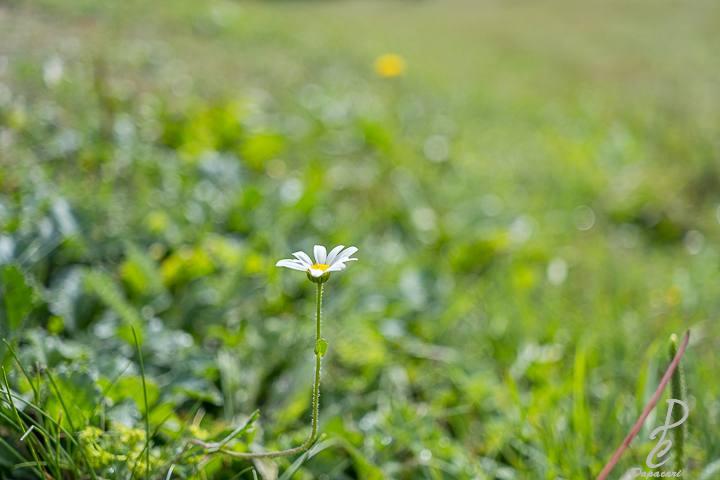 vue rapprocher sur une fleur, flou arrière plan XF 27mm F2.8