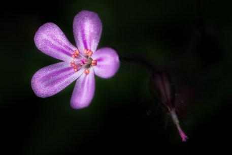 fleur-dans-un-rayon-de-soleil-1000