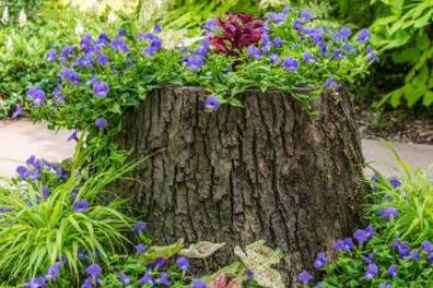 How To Hollow Out A Tree Stump For Planting