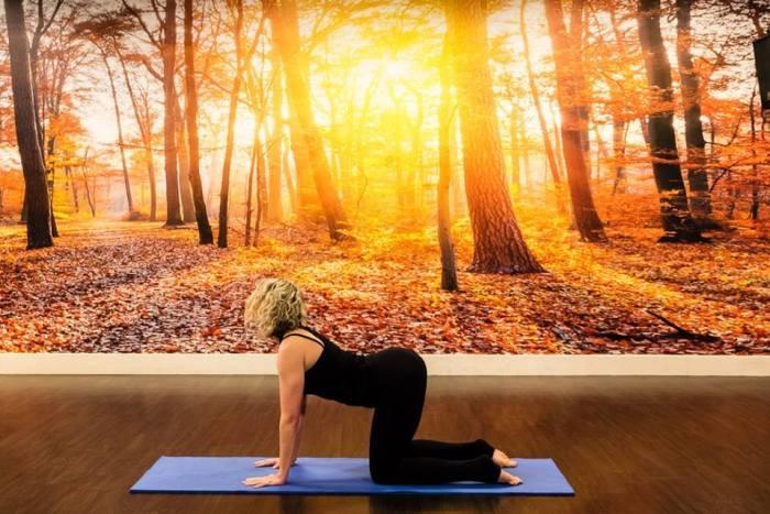 8 Yoga Poses to Reduce Stress | David Lloyd Clubs ...
