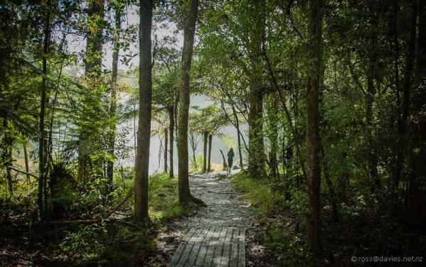 Walk near Rainbow Falls Kerikeri