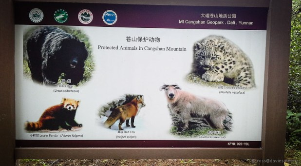 Animals of Mt Cangshan Dali