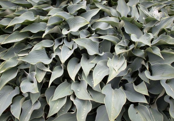 Plants Lanhydrock Gardens